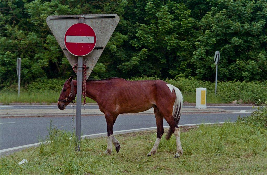 Abandoned Horse