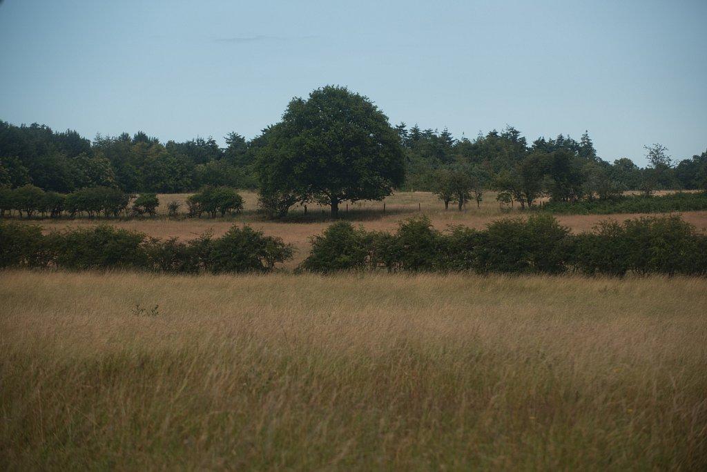 Rewilding on the Somerleyton estate.