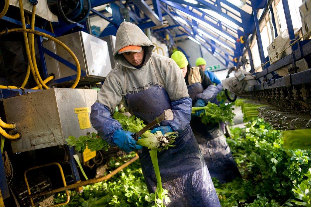 barber-migrant-workers-002.jpg