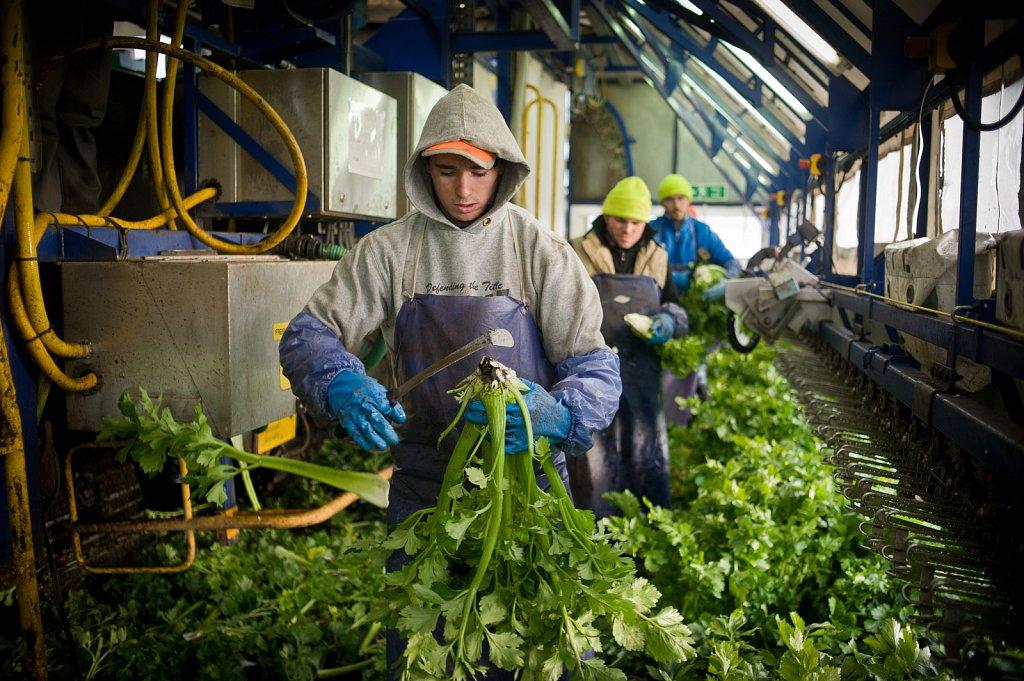barber-migrant-workers-003.jpg