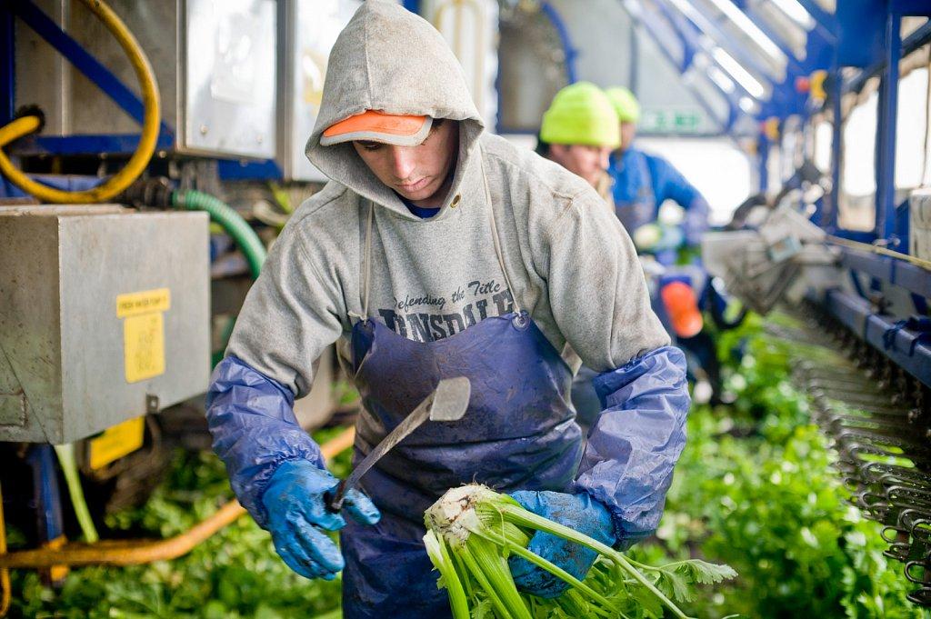 barber-migrant-workers-005.jpg