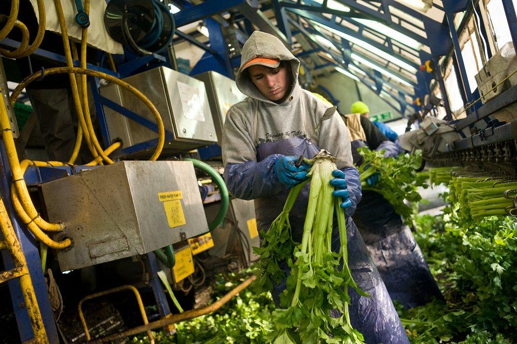 barber-migrant-workers-006.jpg