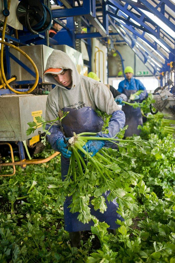 barber-migrant-workers-008.jpg