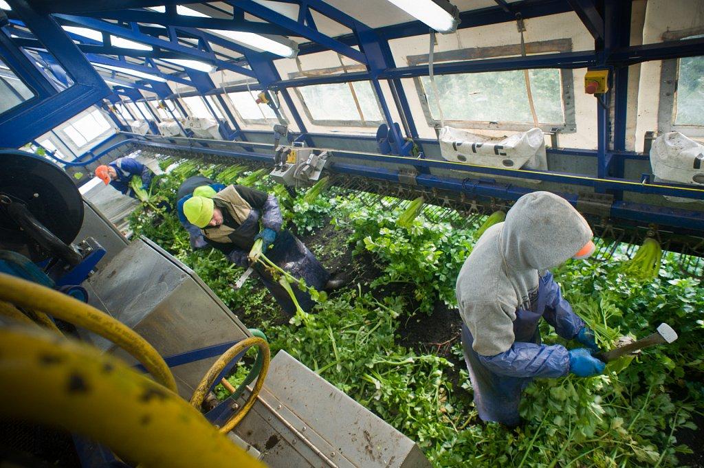 barber-migrant-workers-009.jpg