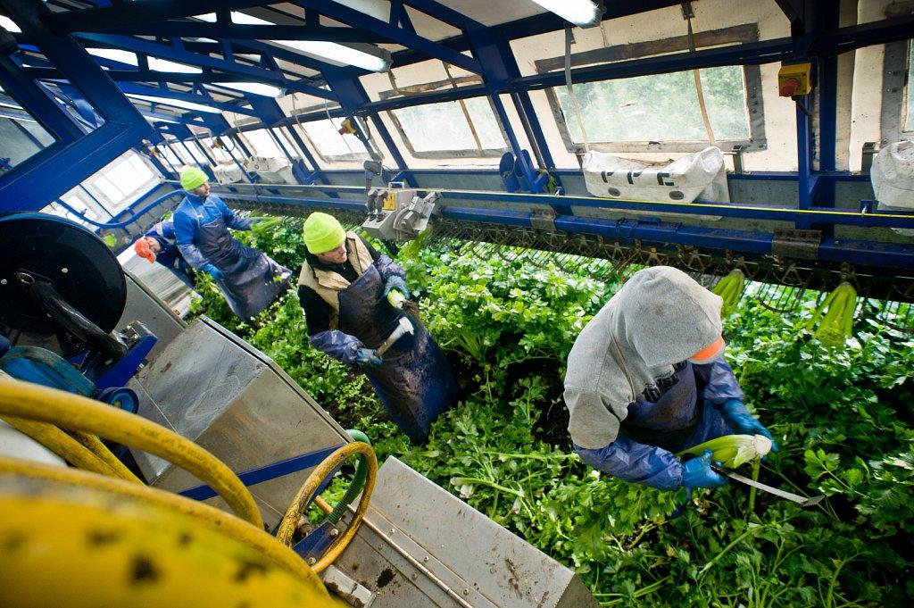barber-migrant-workers-010.jpg