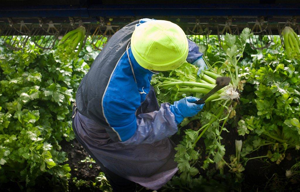 barber-migrant-workers-011.jpg