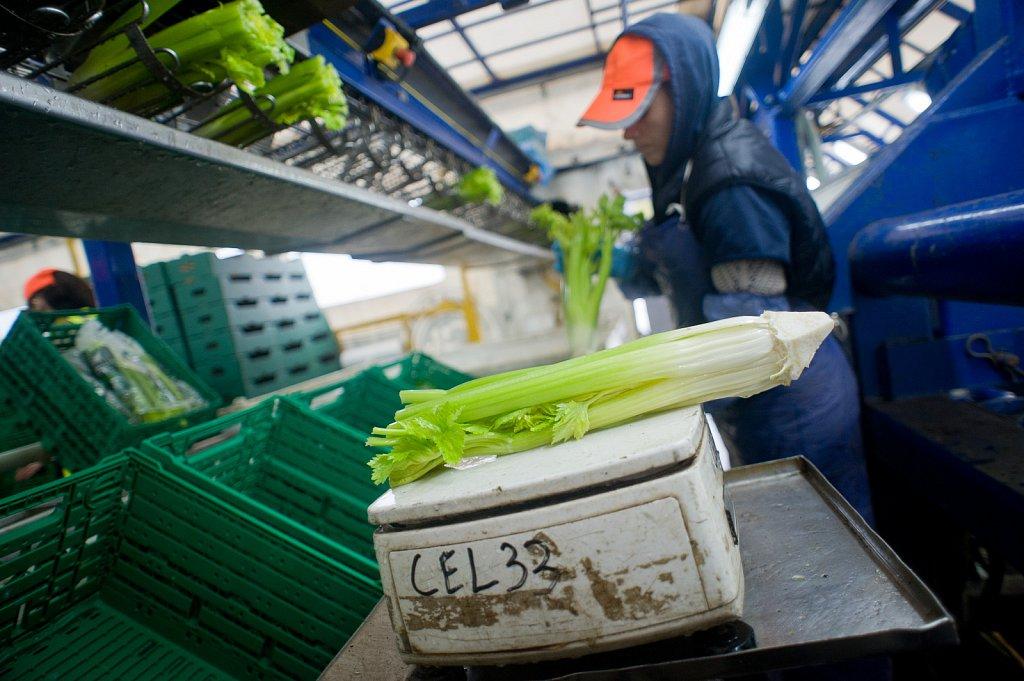 barber-migrant-workers-012.jpg