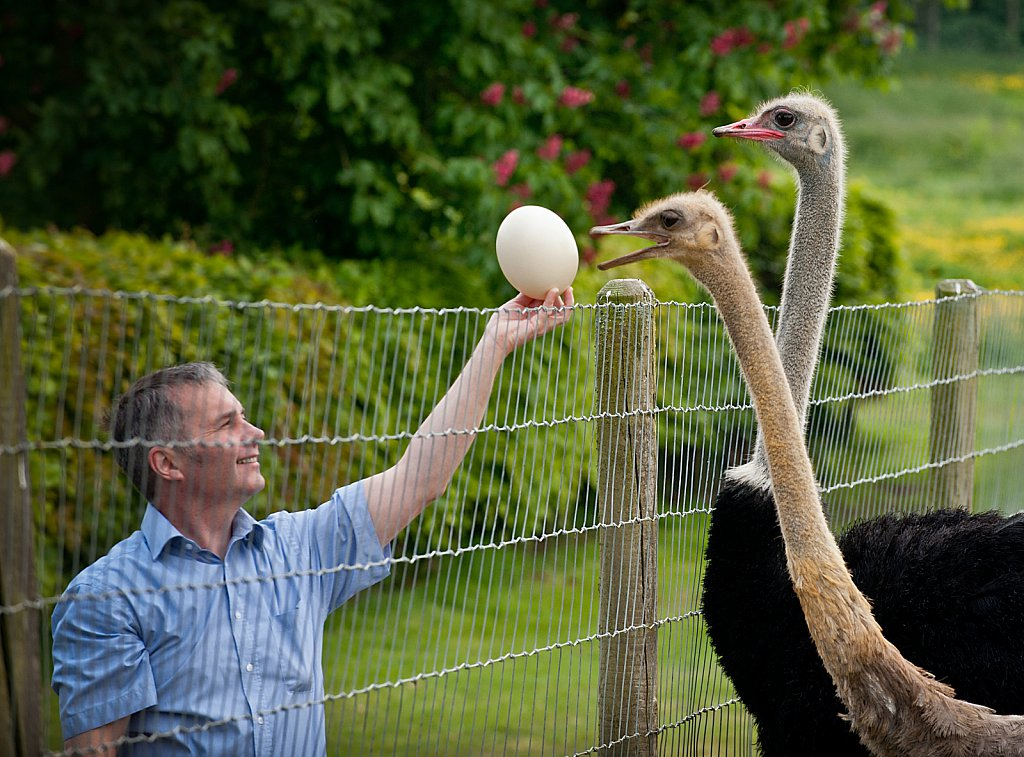 Brian Tomlin, Ostrich Breeder. For Waitrose Supermarkets